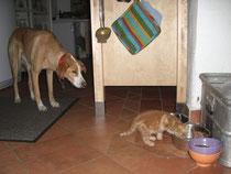 Tiere der Tierheilpraktikerin Michaela Ried