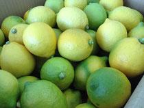 狭間農園産 広島レモン