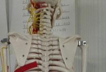 背中の上部の痛み