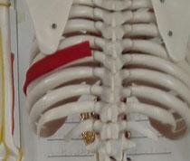 背中の痛みと胸椎の歪み