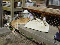 「動物福祉協会栃木支部」川崎様提供写真