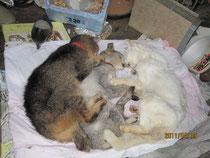 「犬猫救済の輪」結様提供写真