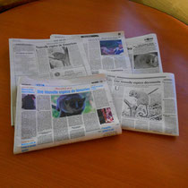 Gerps-Mausmaki in der madagassischen Presse.