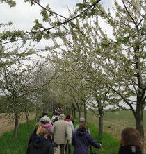 Schweigend durch die Obstblüte
