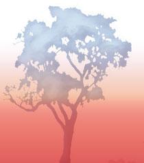 afrikanischer Lebensbaum