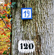 120: numéro de parcelle