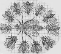 Das Bienenvolk schart sich um die Königin