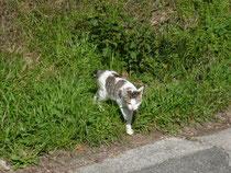 近所の猫。名前は知らない。