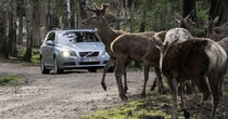 Foto: (c) Volvo.de