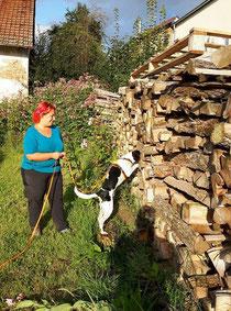 Timo bei der Suchhundearbeit
