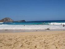 イルカといえばハワイなので