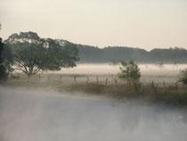 Finowtal im Nebel
