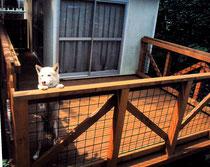 犬ウッドデッキ札幌