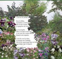 Ultime poème de Louis Guillaume. Composition florale/hommage de Jeanine Rivais