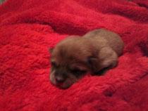am 02.01.2012 ist eine süße Hündin geboren