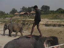 Safari nature au Chitwan National Park, Népal
