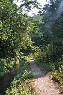 Der Weg durch den Dschungel