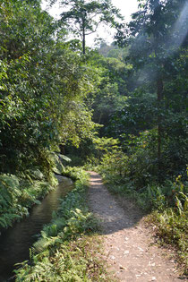 The way through the jungle