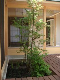横浜の植木屋 神奈川の植木屋 大和の植木屋