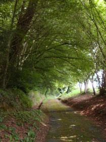 Une petite route mène au moulin