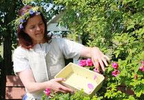 So werden Rosen richtig geerntet: Nur die Blätter, die bei leichter Berührung von alleine abfallen werden mitgenommen. Foto: Konder
