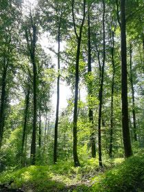 Sich wie die Bäume mithilfe der Schwerkraft aufrichten und den Kronenpunkt zum Himmel tragen