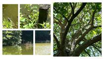 Und auch an einem See sitzend oder unter einem Baum liegend lassen sich wunderbar die Natur beobachten, während der Atem in die Länge fließt und sich die Tiefenmuskulatur vernetzt