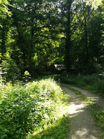 Wanderung in der Natur mit aufgespannter Leichtigkeit