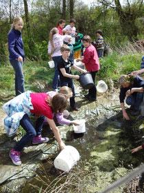 SchülerInnen des OHG sammeln Tiere und Pflanzen aus dem alten Teich ab (Foto: I.Keller)