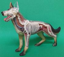 イヌ(犬)の模型1