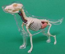 イヌ(犬)の模型2