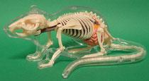 ネズミ(鼠)の模型