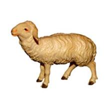Bild Krippentier Schaf stehend links aus Ahornholz geschnitzt