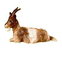 Bild Krippenfigur Thomas Ziege liegend aus Ahornholz geschnitzt