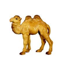 Bild Krippenfigur Thomas junges Kamel aus Ahornholz geschnitzt