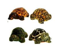 Bild Schildkröten Nr. 651604 handgeschnitzt aus Holz
