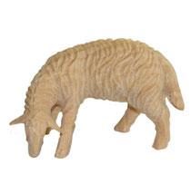 Bild Krippenfigur Schaf grasend handgeschnitzt aus Zirbenholz