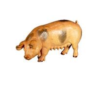 Bild Krippentier Schwein aus Ahornholz geschnitzt