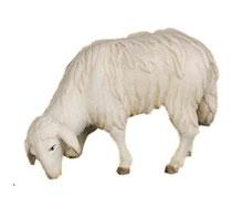 Bild Krippentier Schaf grasend aus Ahornholz geschnitzt