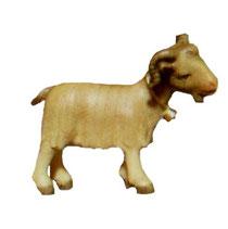Bild Krippenfigur Thomas modern Ziege aus Ahornholz geschnitzt