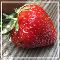 Frische Erdbeeren © Christina Becker
