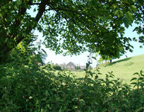 Dowriche House, near Crediton, behind the trees