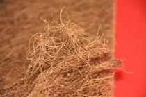 высококачественная длинноволокновая кокосовая койра, экологичный, долговечный , упругий  материал, создающий ортопедичный эффект