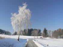 Winterwanderung bei Plauen
