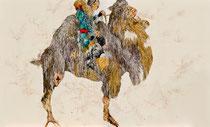 camel rider 2013