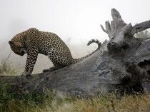 Aus dem Hause Jaguar:
