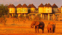 taita hill elefanti in2kenya safari watamu kenya