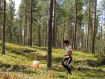 (イメージ)フィンランドの森を走る小泉