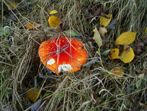 Pilze in Mähring im Bayerischen Wald