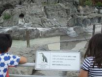 ペンギンとちびきのこ